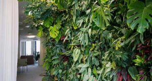 TIPS FOR PLANTING A LIVING WALL